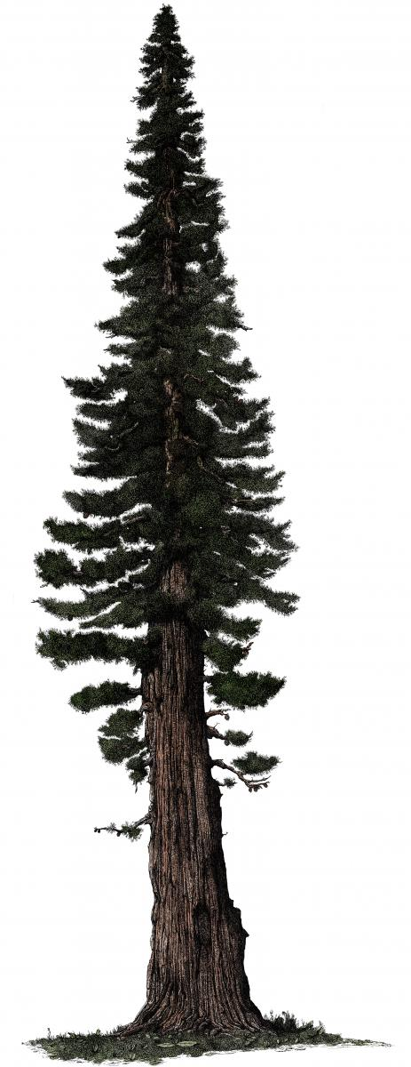 1430817170-giant-sequoia-site.jpg