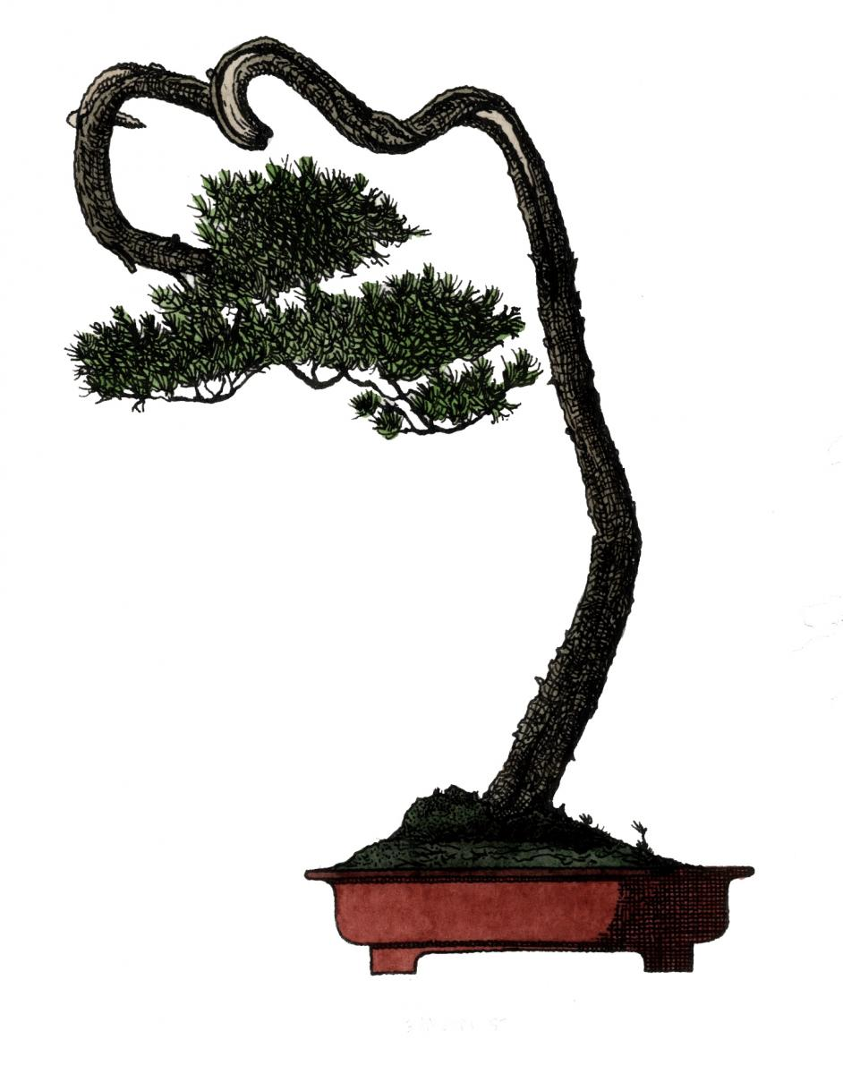 1463416573-bonsai-h-copy.jpg